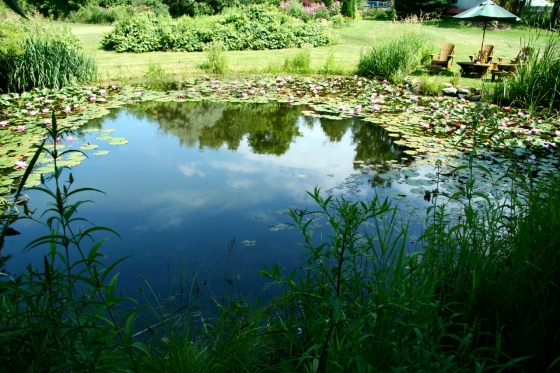 Manifestations from a Pond